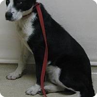 Adopt A Pet :: Bandit - Gary, IN