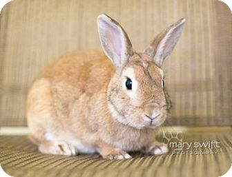 American Mix for adoption in Reisterstown, Maryland - Eustace