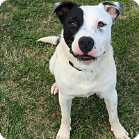 Adopt A Pet :: Levi - Homewood, AL