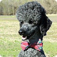 Adopt A Pet :: Zulu ADOPTED! - moscow mills, MO