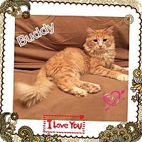 Adopt A Pet :: Buddy - Harrisburg, NC