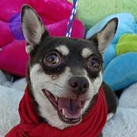 Adopt A Pet :: Desire - Vacaville, CA