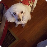 Adopt A Pet :: Tater Tot in Rocky Mt, NC - Spartanburg, SC