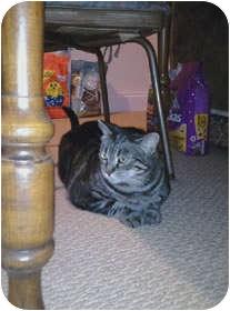 Domestic Mediumhair Cat for adoption in Avon, New York - SkinnyBalink