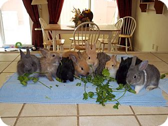 Other/Unknown Mix for adoption in Bonita, California - Golf Course Babies