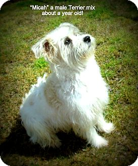 Terrier (Unknown Type, Medium) Mix Dog for adoption in Gadsden, Alabama - Micah
