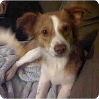 Adopt A Pet :: Hutch - Arlington, TX