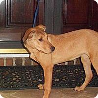Adopt A Pet :: SHELLY - Wakefield, RI