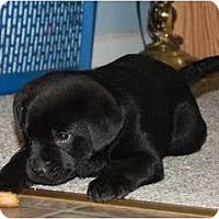 Adopt A Pet :: Frank - Glastonbury, CT
