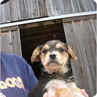 Adopt A Pet :: Nixie - Glastonbury, CT