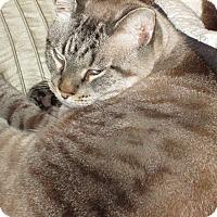 Adopt A Pet :: Mickey - Monroe, GA