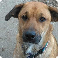 Adopt A Pet :: Maid (pending) - Northumberland, ON