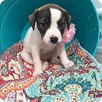 Adopt A Pet :: Margo - Russellville, KY