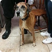 Adopt A Pet :: Tasha - Newport, KY