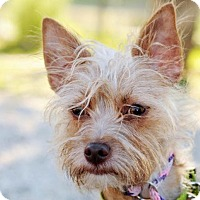 Adopt A Pet :: Herbie - Newhall, CA