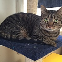 Adopt A Pet :: Crab - Middletown, NY