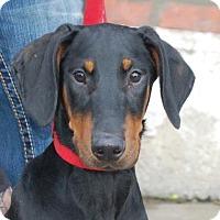 Adopt A Pet :: Zeus - Brooklyn, NY