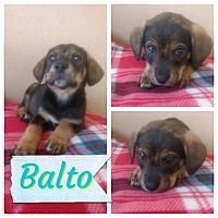 Adopt A Pet :: Balto - LAKEWOOD, CA