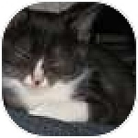 Adopt A Pet :: Dorothy - Vancouver, BC