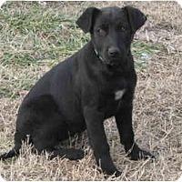 Adopt A Pet :: MISTY - Plainfield, CT