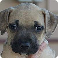 Adopt A Pet :: SARA - Torrance, CA