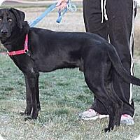 Adopt A Pet :: Range - Lewisville, IN