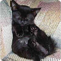 Adopt A Pet :: Bug-A-Boo - Modesto, CA
