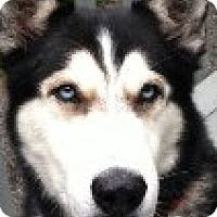 Adopt A Pet :: Bruiser - Horsham, PA