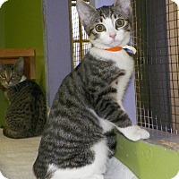 Adopt A Pet :: Cara - Dover, OH