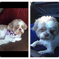 Adopt A Pet :: Bailey - calimesa, CA