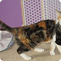 Adopt A Pet :: Lil Bit - Leamington, ON