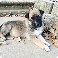 Adopt A Pet :: Trisha (has been adopted) - Burlington, VT
