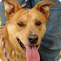 Adopt A Pet :: Baxter - Providence, RI