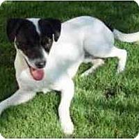 Adopt A Pet :: Dude - Scottsdale, AZ