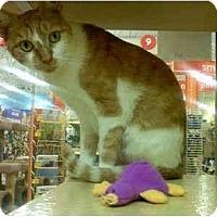 Adopt A Pet :: Mae - Colmar, PA