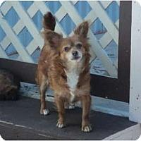 Adopt A Pet :: Stray - Red - Morgan Hill, CA