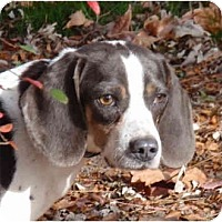Adopt A Pet :: Gypsy - Indianapolis, IN