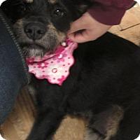 Adopt A Pet :: Allison - Foster, RI