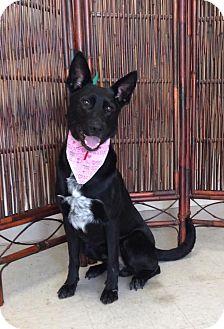 German Shepherd Dog Mix Dog for adoption in Atchison, Kansas - Wiley