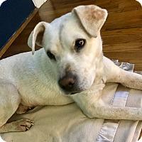 Adopt A Pet :: SERGEANT - Fishkill, NY