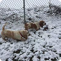 Adopt A Pet :: Emma & LuLu - Lisbon, OH
