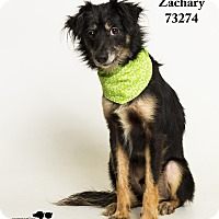 Adopt A Pet :: Zachary - Baton Rouge, LA