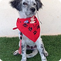 Adopt A Pet :: Phillip - San Diego, CA