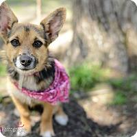 Adopt A Pet :: Chloe - Muldrow, OK
