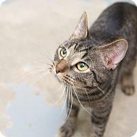 Adopt A Pet :: Toby - Schererville, IN