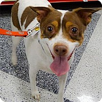 Adopt A Pet :: Winston papered purebred - Sacramento, CA