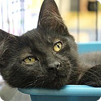Adopt A Pet :: Kumo - Santa Monica, CA