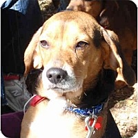 Adopt A Pet :: Ike - Indianapolis, IN