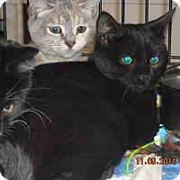 Adopt A Pet :: Brooklyn - Riverside, RI