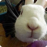 Adopt A Pet :: Sophia - Portland, ME